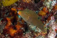 Koral ryba Fotografia Stock