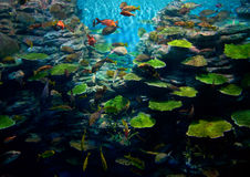 koral ryba Obraz Stock