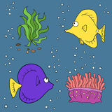 Koral ryba set Zdjęcia Stock