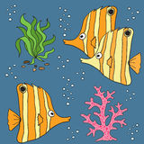 Koral ryba set Fotografia Royalty Free