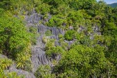 Koral skała Obraz Stock