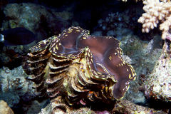 koral tropikalny Zdjęcia Royalty Free