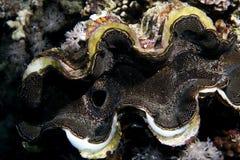 koral tropikalny Zdjęcie Royalty Free