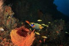 Koral w rafie Obraz Stock