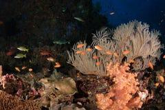 Koral w rafie Fotografia Stock