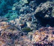 Koral w Wielkiej bariery rafie w Australia zdjęcia stock
