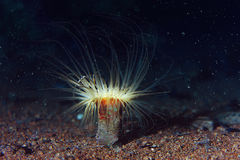 Koral w zmroku głęboko obrazy royalty free