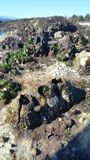 Koral wybierająca ostrość Obraz Stock