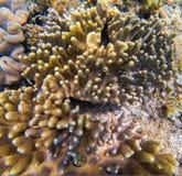 Koral z małych ryba podwodną fotografią Seashore tekstura Koralowy zbliżenie Fotografia Stock