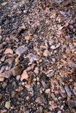 Korala Rockowego tła Dziewicze wyspy zdjęcia royalty free
