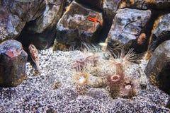korala ryba krajobrazu rafy tropikalny underwater Obrazy Royalty Free