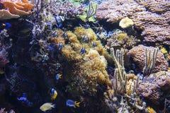 korala ryba krajobrazu rafy tropikalny underwater Obrazy Stock