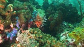 korala ryba rafa tropikalna Bali, Indonezja obrazy stock