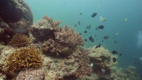 korala ryba rafa tropikalna Camiguin, Filipiny zbiory