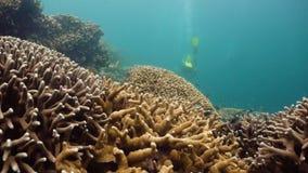 korala ryba rafa tropikalna Camiguin, Filipiny zdjęcie wideo