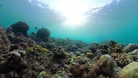 korala ryba rafa tropikalna zbiory