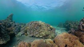 korala ryba rafa tropikalna zdjęcie wideo