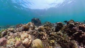 korala ryba rafa tropikalna zbiory wideo