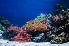 korala rybi życia rafy underwater Fotografia Stock