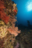 korala rybia oceanu miękka część Zdjęcia Royalty Free