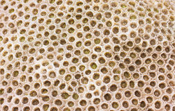 korala skały tekstura Zdjęcia Royalty Free