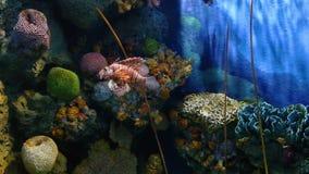 Korale i egzotyczna morska ryba zdjęcie wideo