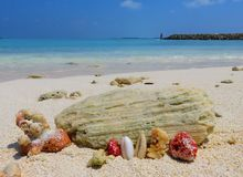 Korale i morze Obrazy Royalty Free