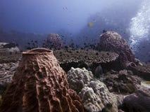Korale i naturalny życie Zdjęcie Royalty Free