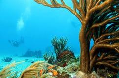Korale i nurkowie Obraz Royalty Free