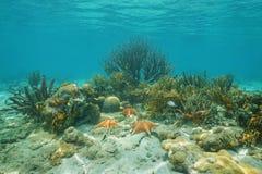 Korale i rozgwiazdy podwodny morze karaibskie Obraz Royalty Free