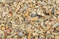 Korale i Seashells Obrazy Stock
