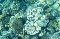 Korale na dnie morskim Obrazy Royalty Free
