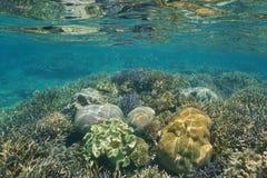 Korale podwodni na spłycają rafowego Nowego Caledonia Obrazy Royalty Free