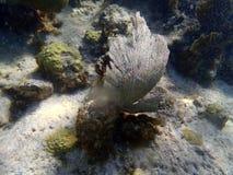 Korale w karaibskim Zdjęcie Stock