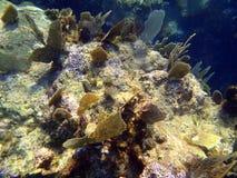 Korale w karaibskim Zdjęcia Royalty Free
