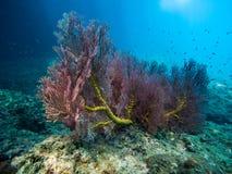 Korale w Ko Muk, Ko Lanta, Tajlandia Fotografia Royalty Free