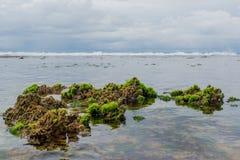 Korale w oceanie Obrazy Stock