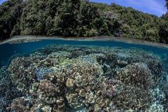 Korale w Tropikalnej lagunie Zdjęcia Royalty Free