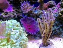 Koralen royalty-vrije stock afbeeldingen