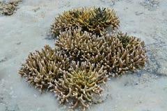 koralen Royalty-vrije Stock Foto's
