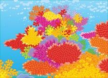 koralen Stock Foto's