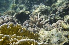 Koralen bij de bodem royalty-vrije stock afbeelding