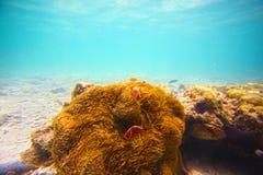 Koralen, clownfish en palmeiland Stock Fotografie