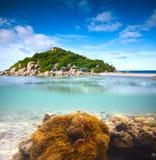Koralen, clownfish en palmeiland - halve onderwaterspruit. Stock Afbeeldingen
