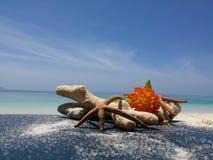 Koralen en bloemen Stock Afbeeldingen