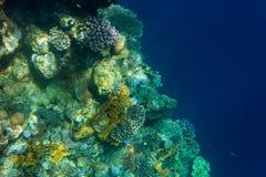 Koralen en diep stock afbeeldingen