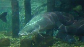 Koralen en exotische mariene vissen stock footage