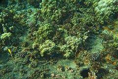 Koralen en exotische vissen stock fotografie