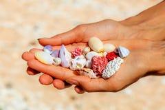 Koralen en shells in palmen van handen, Nusa Lembongan, Indonesië Royalty-vrije Stock Foto