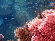 Koralen en vissen Stock Afbeeldingen